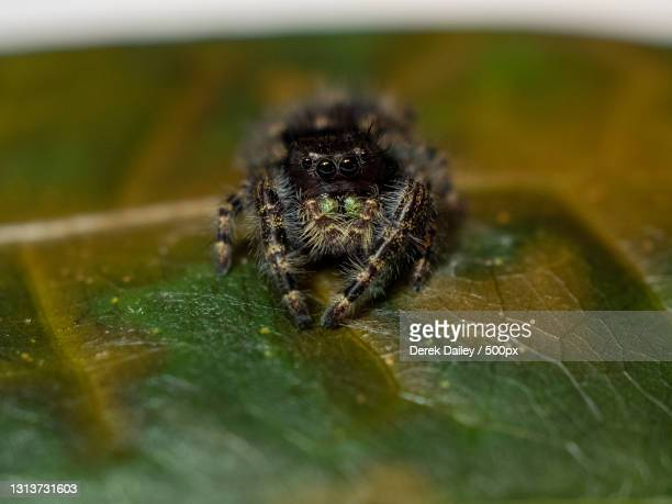 close-up of spider on leaf,indianapolis,indiana,united states,usa - indianapolis stock pictures, royalty-free photos & images