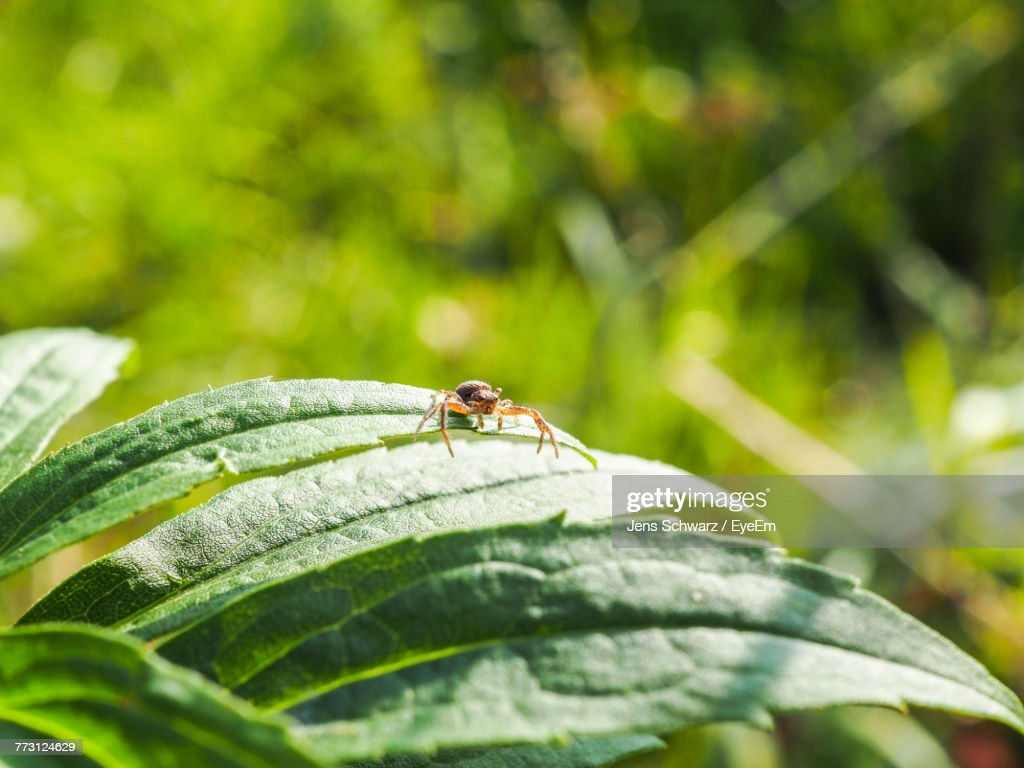 Close-Up Of Spider On Plant : Stock Photo