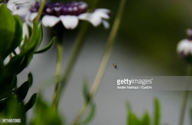 Close-Up Of Spider On Plant