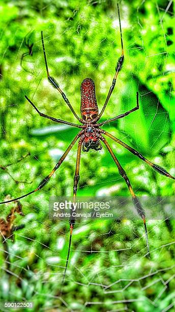 close-up of spider on web against plants - carvajal stock photos and pictures