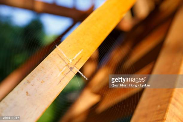 close-up of spider on web over wood - hong quan stock pictures, royalty-free photos & images