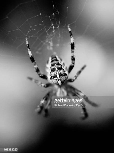 close-up of spider on web - sandhurst stock pictures, royalty-free photos & images