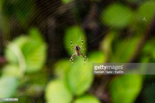 close-up of spider on web - borough of lewisham stock pictures, royalty-free photos & images