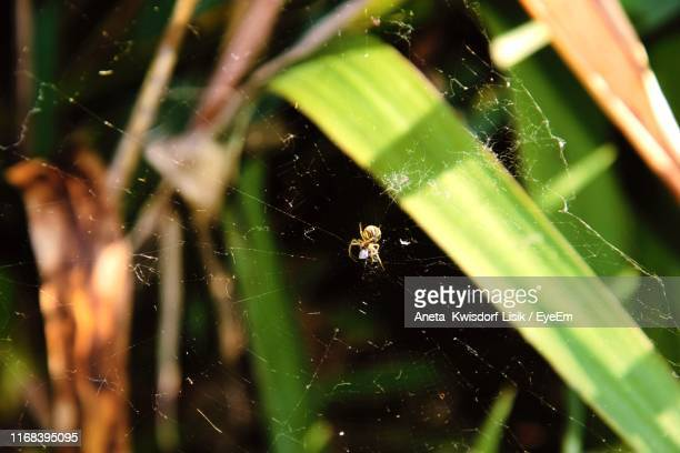 close-up of spider on web - aneta eyeem stock pictures, royalty-free photos & images