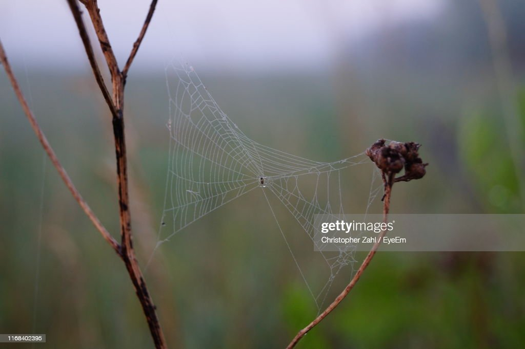 Close-Up Of Spider On Web : Stock Photo