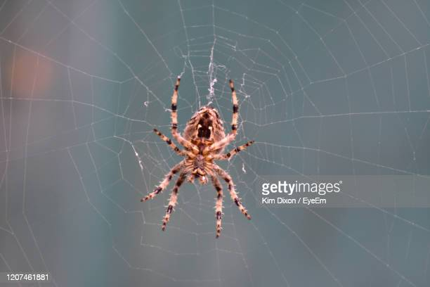 close-up of spider on web - toxic substance stock pictures, royalty-free photos & images