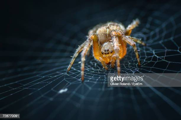 close-up of spider on web - spider stock pictures, royalty-free photos & images