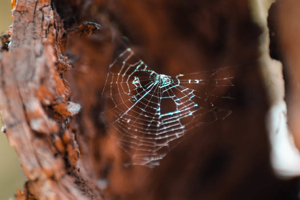 Close-up of spider on web,Albacete,Spain
