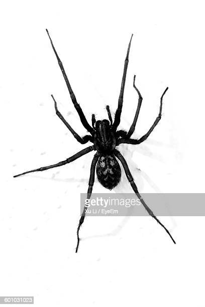 close-up of spider on white background - spider stock pictures, royalty-free photos & images