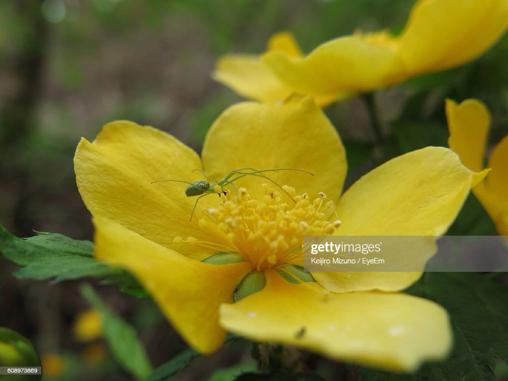 Closeup Of Spider On Yellow Flower Blooming Outdoors Stock Photo