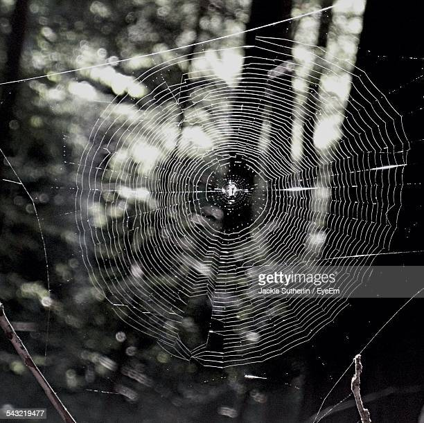 close-up of spider web in forest - ragnatela foto e immagini stock