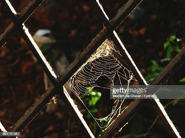 Close-Up Of Spider Web On Rusty Metal