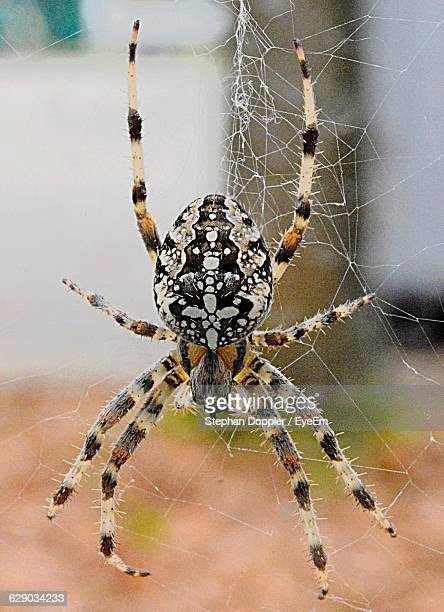 Close-Up Of Spider Web On Web