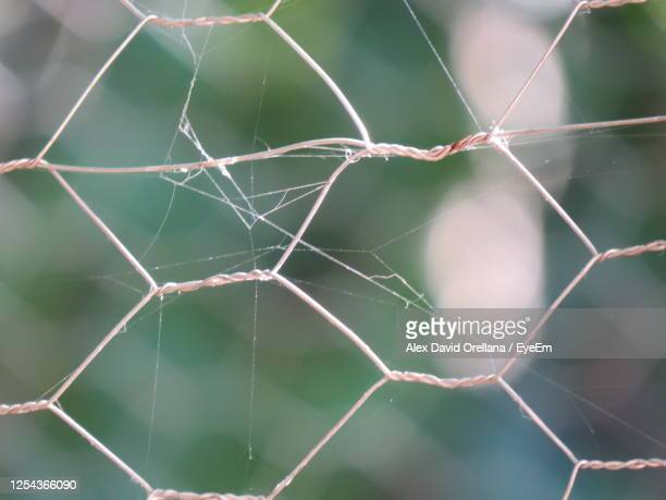 close-up of spider web - spider rock stock pictures, royalty-free photos & images