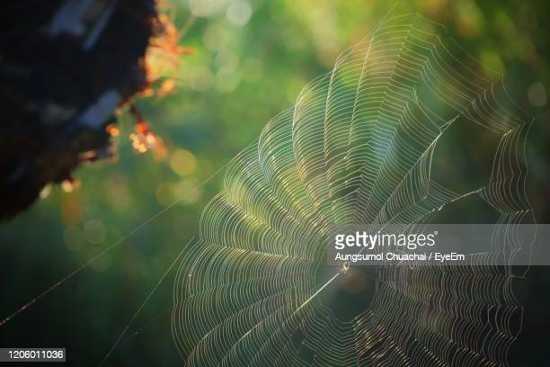 close-up of spider web with rain drop on plant in summer morning. - aungsumol stock pictures, royalty-free photos & images