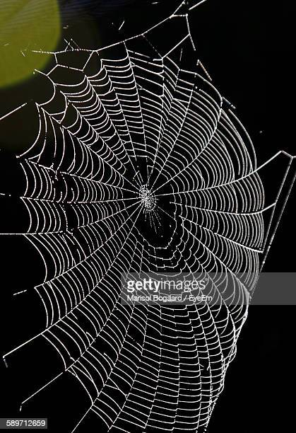 Close-Up Of Spider Wed