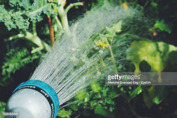 Close-Up Of Spraying Water From Hose Over Plants At Yard
