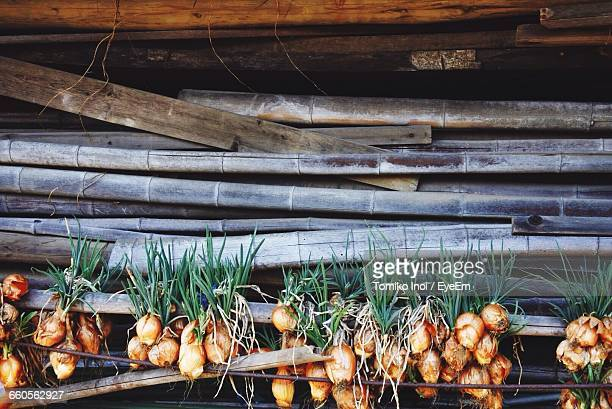 Close-Up Of Spring Onions