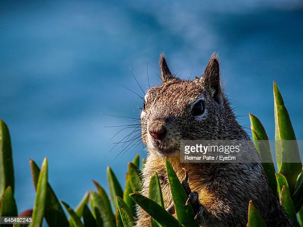 Close-Up Of Squirrel Amidst Grass