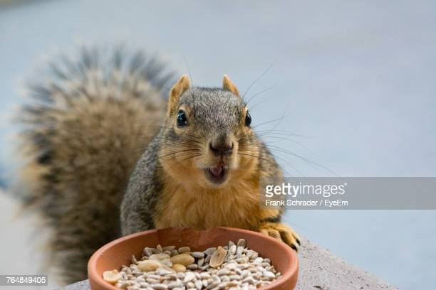 Close-Up Of Squirrel Eating Food