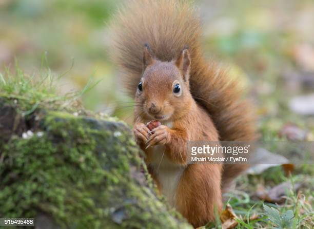 Close-Up Of Squirrel Eating Outdoors