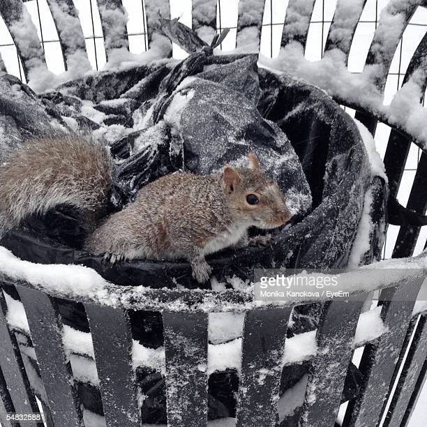 Close-Up Of Squirrel In Garbage Can