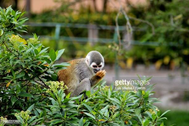 Close-Up Of Squirrel Monkey On Plant