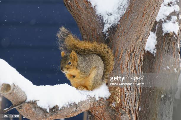 Close-Up Of Squirrel On Branch During Winter