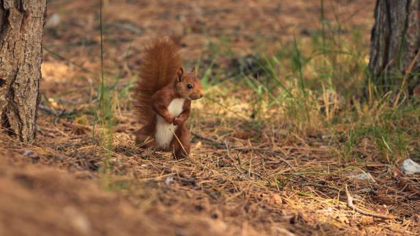 Close-up of squirrel on field,La Rioja,Spain
