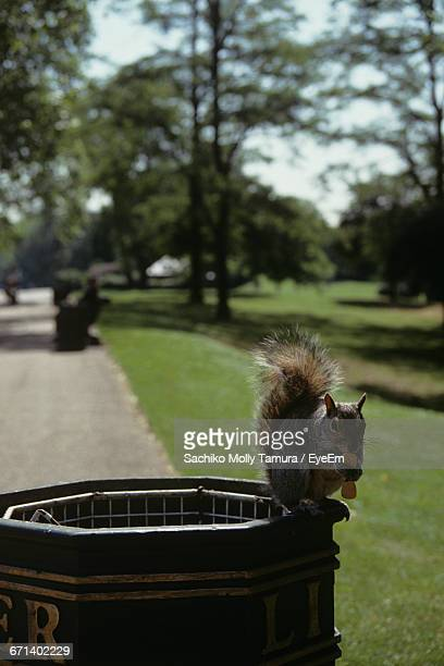 Close-Up Of Squirrel On Trash Container