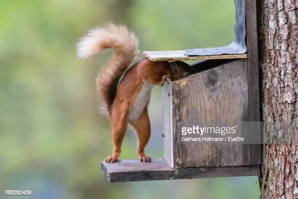 close-up of squirrel on tree - curiosity stock photos and pictures