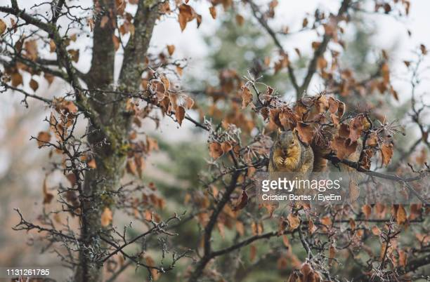 Close-Up Of Squirrel On Wilted Plant