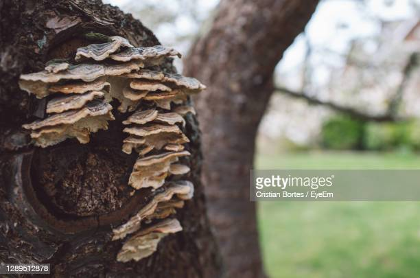close-up of stack of tree trunk - bortes stock pictures, royalty-free photos & images