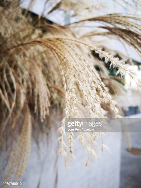 close-up of stalks against the sky - kranj stock pictures, royalty-free photos & images