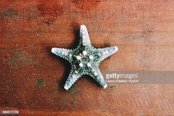 Close-Up Of Starfish On Brown Surface