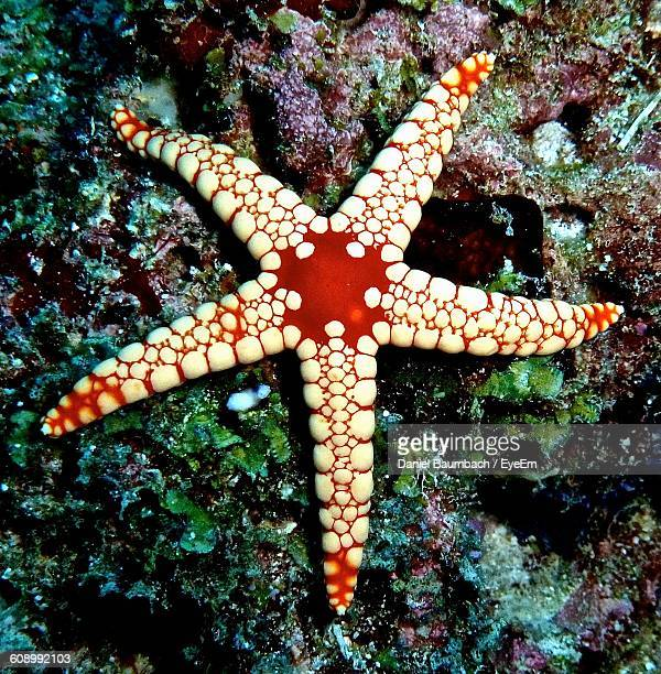 Close-Up Of Starfish On Rock