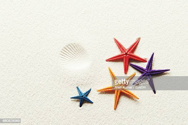 close-up of starfish on sand - starfish stock pictures, royalty-free photos & images
