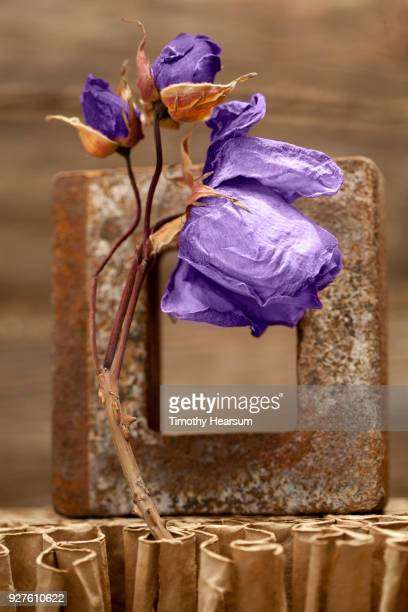 Close-up of still life of dried ultraviolet roses with other found objects