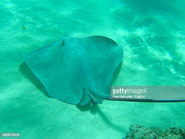 Close-Up Of Stingray In Sea