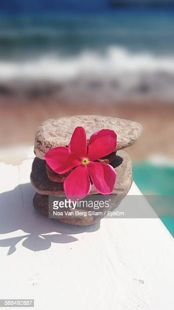 Close-Up Of Stone Stack With Pink Flower On Table At Beach
