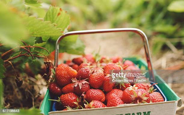 close-up of strawberries in basket - esher stock pictures, royalty-free photos & images