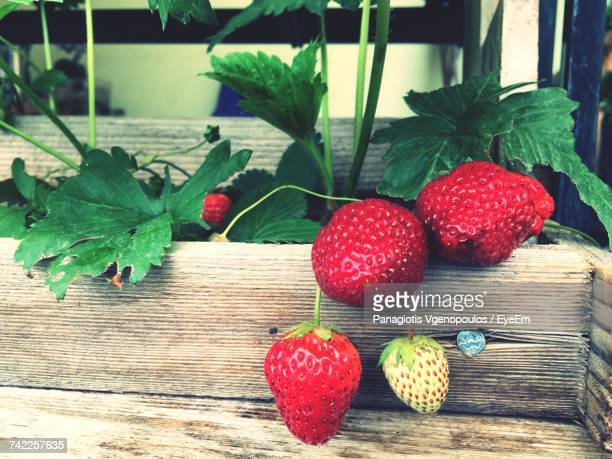 close-up of strawberries - vgenopoulos stock pictures, royalty-free photos & images