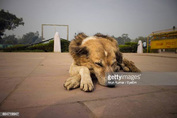 close-up of stray dog sleeping on footpath against sky - stray animal stock pictures, royalty-free photos & images