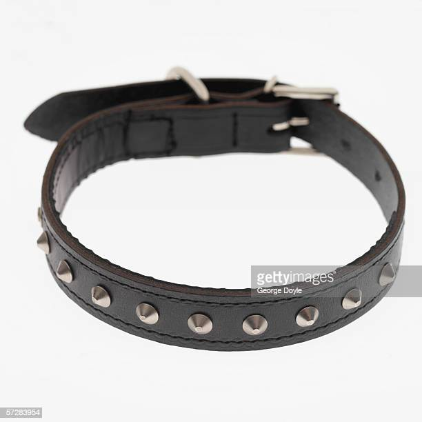 Close-up of studded dog collar