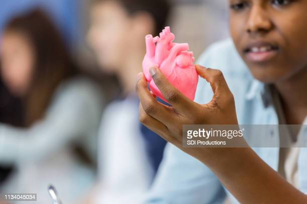closeup of student holding and studying human heart model at school - physiology stock pictures, royalty-free photos & images