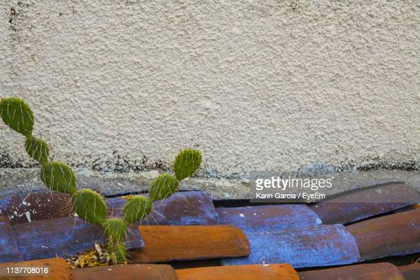 close-up of succulent plant against wall - karin garcia eyeem stock pictures, royalty-free photos & images