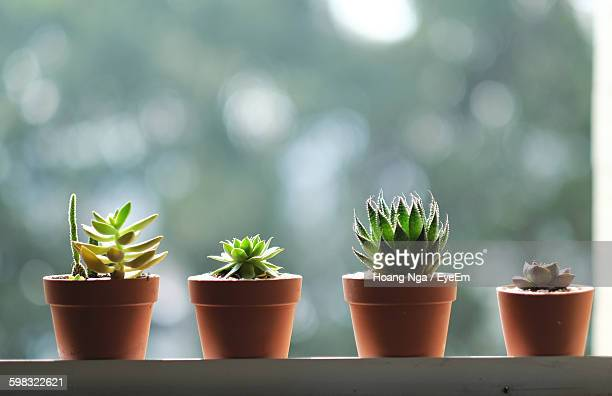 Close-Up Of Succulent Plant Growing On Pots At Window