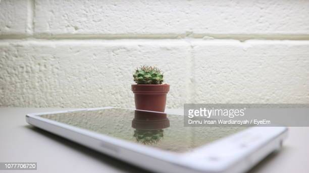 Close-Up Of Succulent Plant With Reflection On Phone