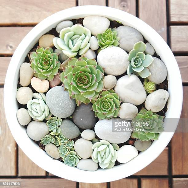 Close-Up Of Succulent Plants And Pebbles