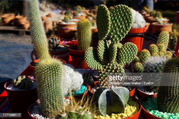 close-up of succulent plants at market - eyeem collection stock pictures, royalty-free photos & images